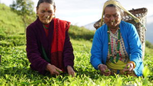 Nepal Tea Farmers Co-op Practices Sustainable Self-Reliance
