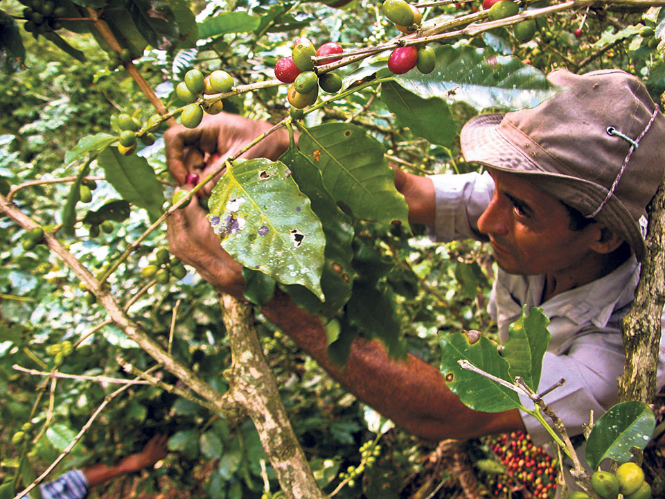 Coffee worth Rs 98 million imported in last fiscal