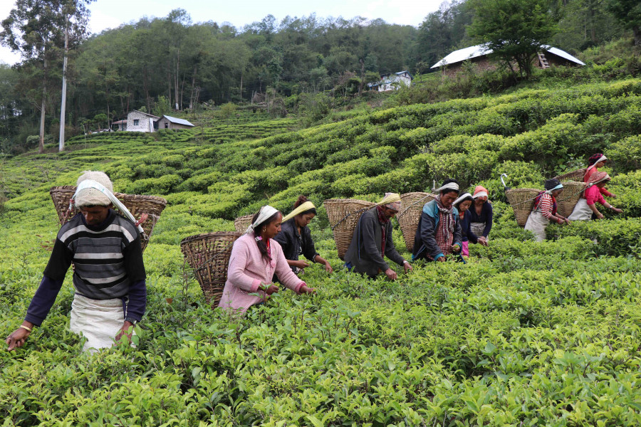 Tea growers set to reap virus bonanza as prices soar amid lower production