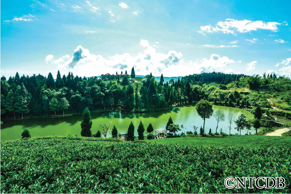 Shree Antu, Tea and Pond